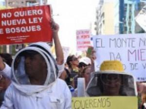 Organizaciones ambientalistas protestan contra la nueva Ley de Bosques en Córdoba