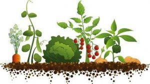 Mapeo de establecimientos y producciones Agroecológicas y Orgánicas