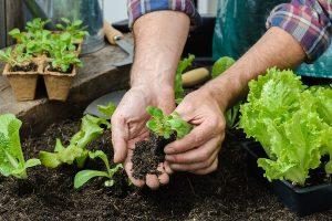 (ACTUALIZADO) Para saber adónde conseguir alimentos orgánicos y agroecológicos